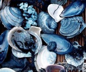 aesthetic, ocean, and seashells image