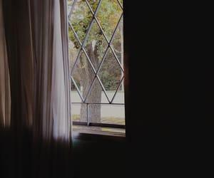 arbol, nature, and window image