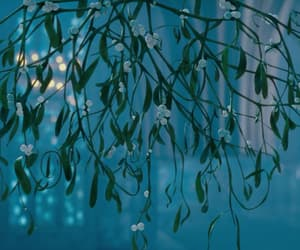 film, harry potter, and mistletoe image
