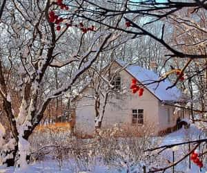berries, scenery, and season image