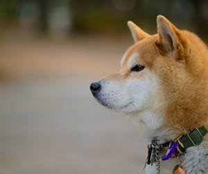 article, dogs images, and wallpapers dogs image