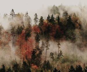 autumn, nature, and wallpaper image