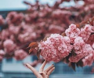 flowers, brandon woelfel, and pink image