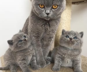 animals, beautiful, and baby image