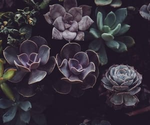 grunge and succulents image