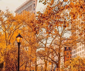 autumn, foliage, and flatiron district image