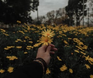 flowers, aesthetic, and yellow image