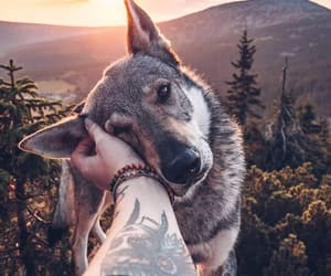 dog, tattoo, and wolf image