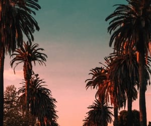 hollywood, wallpaper, and palm trees image