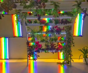 rainbow, aesthetic, and rose image