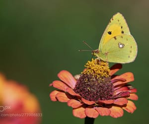 botanical, macro, and butterfly image