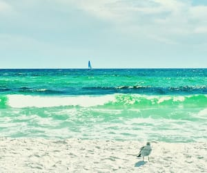 florida, beach life, and turquoise image