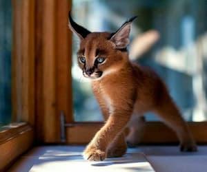 animal, blue eyes, and naturaleza image