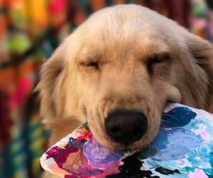 animal, dog, and true love image