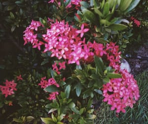 backyard, discover, and flowers image