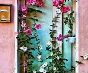 flowers, pink, and door image