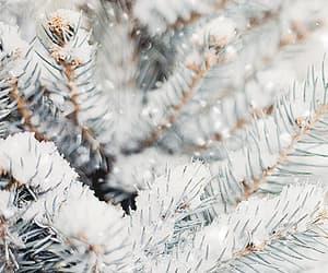 christmas, gif, and evergreen image