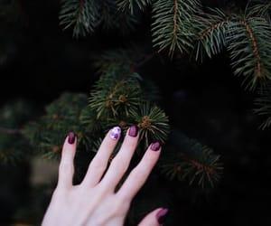 christmas, tree, and evergreen image