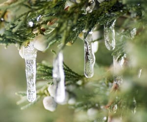 drip, icicles, and evergreen image