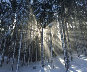forest, snow, and sunlight image