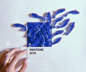 pantone, fish, and green image