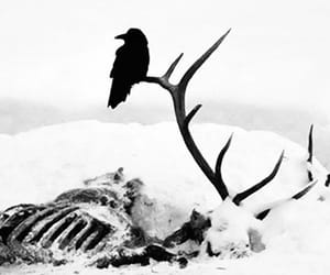 raven, bones, and crow image