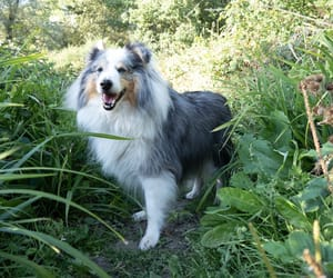 blue, doggie, and dog image