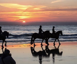 beach, horse, and sunset image
