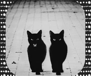 black, black cat, and cats image