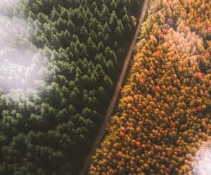 forest, green, and autumn image