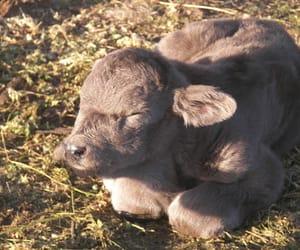 calf and tumblr image