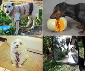 dog, dogs, and partner image