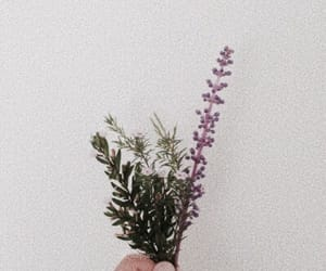 flowers, aesthetic, and plants image