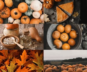autumn, cozy, and fall is here image