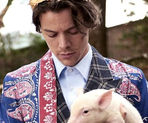 gucci, harrystyles, and Harry Styles image