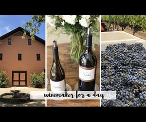 napa, chelsea pearl, and video image