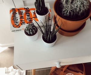 autumn, cactus, and decor image