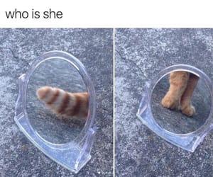 animal, chaton, and mirror image
