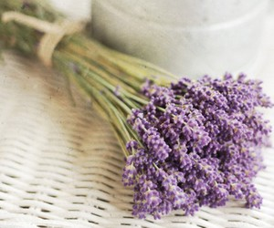 lavender and flower image