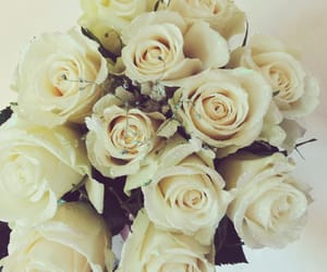 adorable, roses, and rosy image