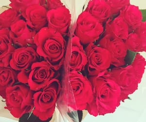 adorable, red roses, and roses image