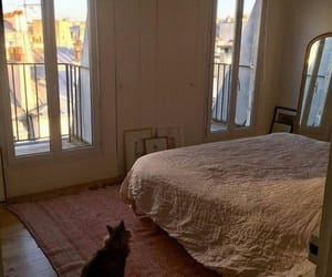 interior, bed, and cat image