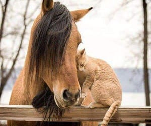 animal, horse, and cat image