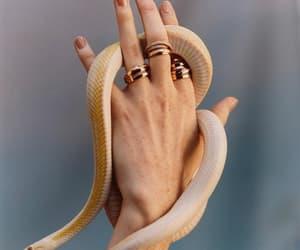 alternative, snake, and theme image