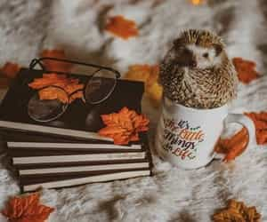 autumn, fall, and hedgehog image