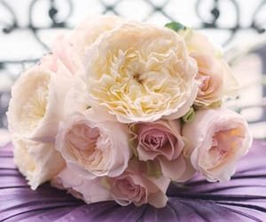 bloom, paris, and romance image