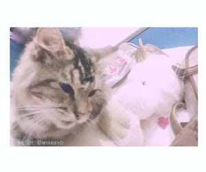 cat, lovely, and pet image