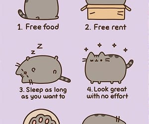cat, classic, and feed image