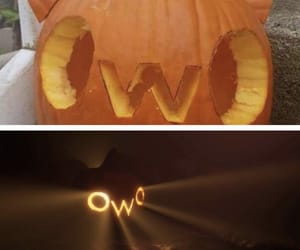 cat, pumpkin, and owo image