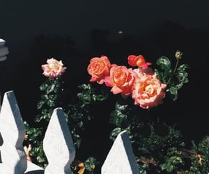 aesthetic, black, and flores image